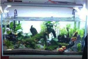 杀菌灯放在鱼缸哪里